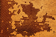 Honeycomb - Closeup I. Closeup of a honeycomb with partly covered filled cells royalty free stock photo