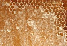 Honeycomb - closeup image as background Royalty Free Stock Photos