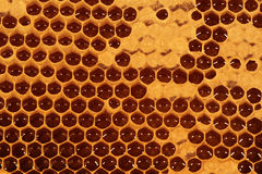 Honeycomb - Closeup IV. Closeup of a honeycomb with partly covered filled cells stock image