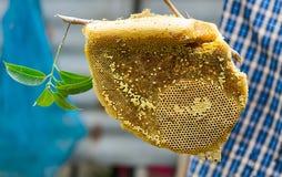 Honeycomb closeup Stock Image