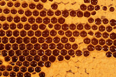 Honeycomb - Closeup V. Closeup of a honeycomb with partly covered filled cells stock photo