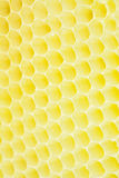 Honeycomb closse up Royalty Free Stock Photo