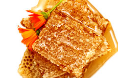 Honeycomb with honey and flowers Royalty Free Stock Photography