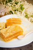 Honeycomb with daisies Stock Photos