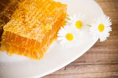 Honeycomb with daisies Royalty Free Stock Image