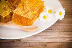 Honeycomb with daisies Royalty Free Stock Photos