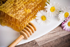 Honeycomb with daisies Stock Images