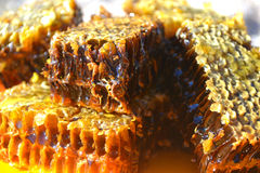 Honeycomb. Delicious honeycomb on a plate macro mea royalty free stock images