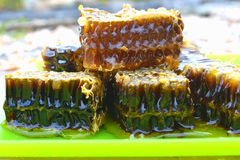 Honeycomb. Delicious honeycomb on a plate macro meal Royalty Free Stock Images
