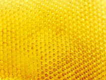 Honeycomb with empty cells Stock Image
