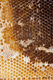 Honeycomb. Extracting honey from honey comb Royalty Free Stock Image