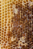 Honeycomb. Extracting honey from honey comb Stock Images