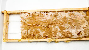 Honeycomb filled with honey Royalty Free Stock Images