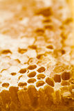 Honeycomb filled with honey Stock Images