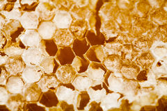 Honeycomb filled with honey Stock Image