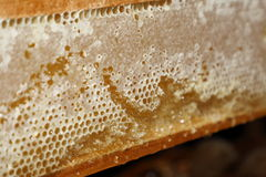 Honeycomb filled with honey texture Royalty Free Stock Image