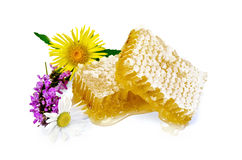 Honeycomb with flowers Royalty Free Stock Image