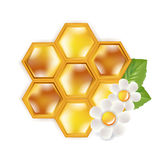 Honeycomb with flowers isolated on white Stock Photos