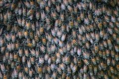 the honeycomb Stock Image