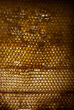Honeycomb on frame with fresh honey Royalty Free Stock Photography