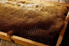 Honeycomb on frame with fresh honey Stock Photo