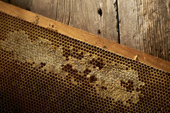 Honeycomb on frame with fresh honey Stock Photography