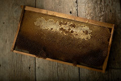 Honeycomb on frame with fresh honey Royalty Free Stock Images