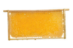 Honeycomb frame with honey on a white background stock photos