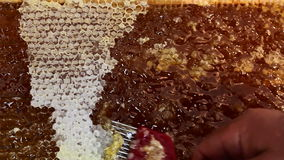 Honeycomb frame a lot of honey stock footage