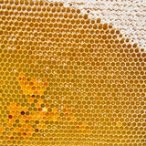 Honeycomb with fresh honey and pollen Stock Image