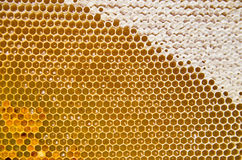 Honeycomb with fresh honey and pollen Royalty Free Stock Photo
