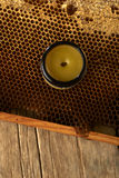 Honeycomb with fresh honey and a vase with cera balsam Royalty Free Stock Image
