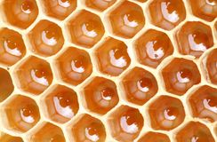 Honeycomb full of honey Royalty Free Stock Photo