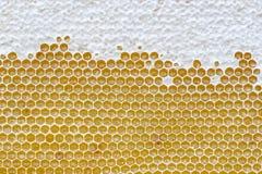 Honeycomb full of honey. royalty free stock photos