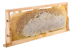 Honeycomb full of honey in wooden frame Stock Photography
