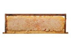 Honeycomb Royalty Free Stock Photography