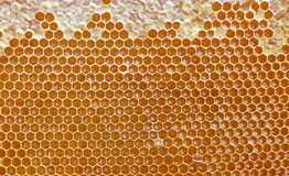 Honeycomb. Golden background. Close up. Honeycomb pattern, hexagonal texture. Abstract pattern background with honeycomb in golden colors royalty free stock image