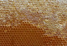 Honeycomb. Golden background. Close up. Honeycomb pattern, hexagonal texture. Abstract pattern background with honeycomb in golden colors stock images