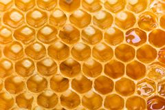 Honeycomb golden pattern royalty free stock images