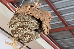 Honeycomb hang on ceiling Royalty Free Stock Photography