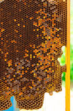 Honeycomb in hive. Honeycomb with wax in hive Stock Images