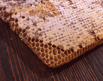 Honeycomb honey Stock Photo