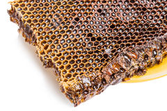 Honeycomb with honey Royalty Free Stock Photography