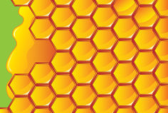 Honeycomb honey Stock Images