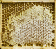 Honeycomb with honey. Close up stock photo