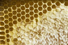 Honeycomb with honey. Close up royalty free stock photo
