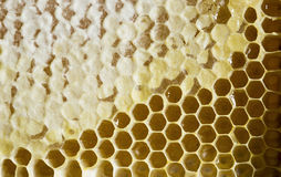 Honeycomb with honey. Close up royalty free stock photos