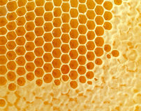 Honeycomb. Or honey comb background created by bees as a healthy lifestyle sweetener symbol of fresh natural organic food from nature contained in hexagon wax Royalty Free Stock Photos