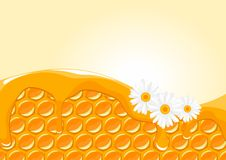 Honeycomb with honey and daisies Stock Images
