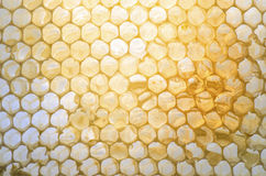 Honeycomb with honey inside. Lighten from back Royalty Free Stock Images